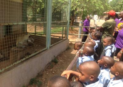 watching the monkeys
